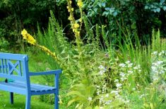 garden bench 888035 960 720 235x154 - Rental property Sale: Using outside space to your advantage